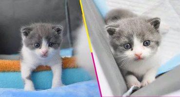 Conozcan a 'Garlic', el primer gato clonado nacido en China