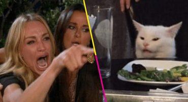 La historia detrás del meme: Conoce la historia del peculiar gatito que odia los vegetales