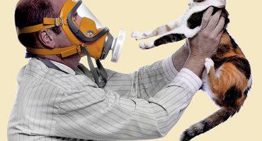 ¡Meaw! Encuentran vacuna contra la alergia a los gatos 😺