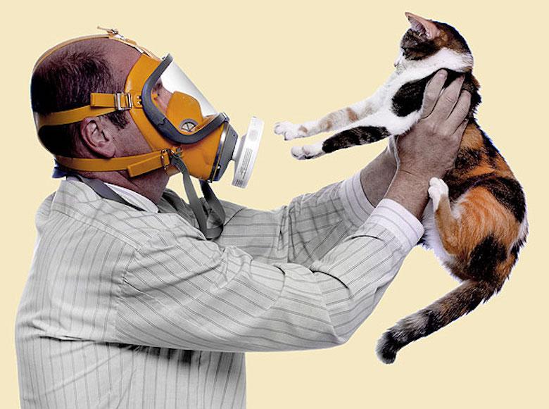 ¡Meaw! Encuentran vacuna contra la alergia a los gatos