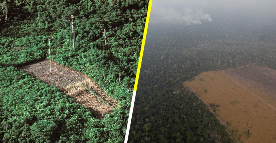 Las fotos del antes y el después del Amazonas para dimensionar los daños que han dejado los incendios