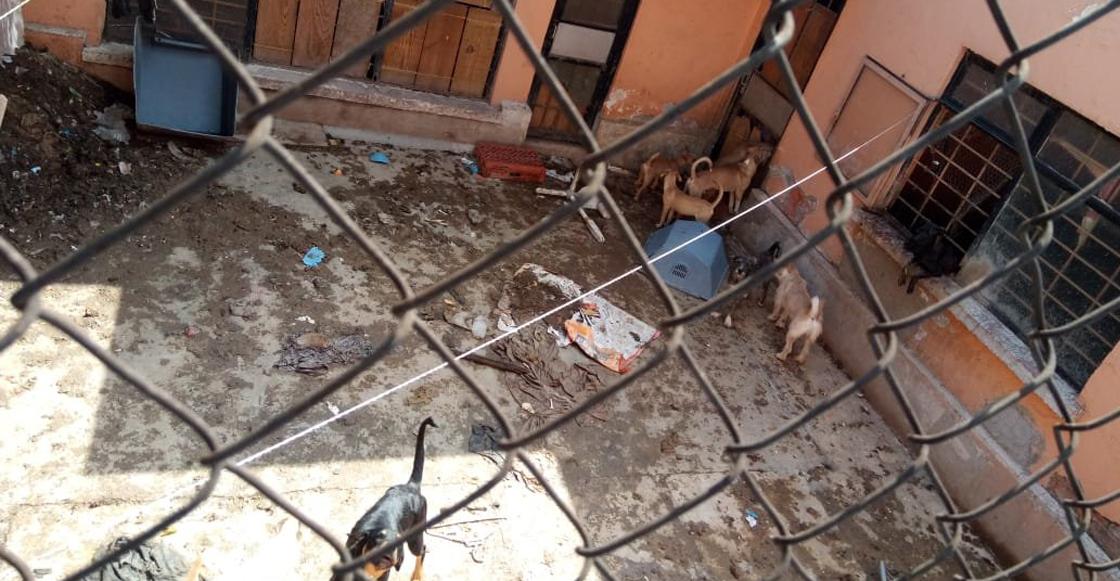 Al menos 20 perros viven encerrados sin comida en la colonia Lindavista