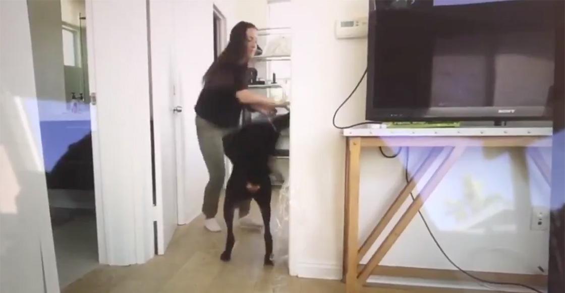 YouTuber es investigada por maltrato animal tras golpear a su perro en un video