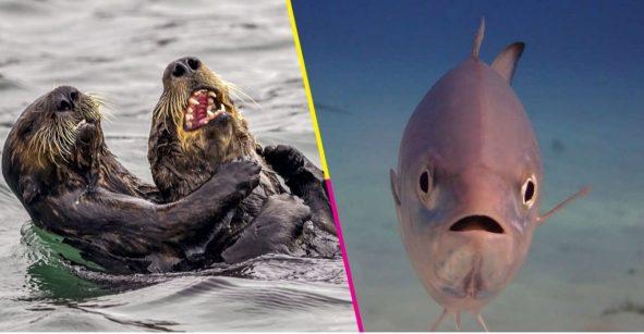 LOL! Este concurso premia a las fotos más cómicas de la naturaleza