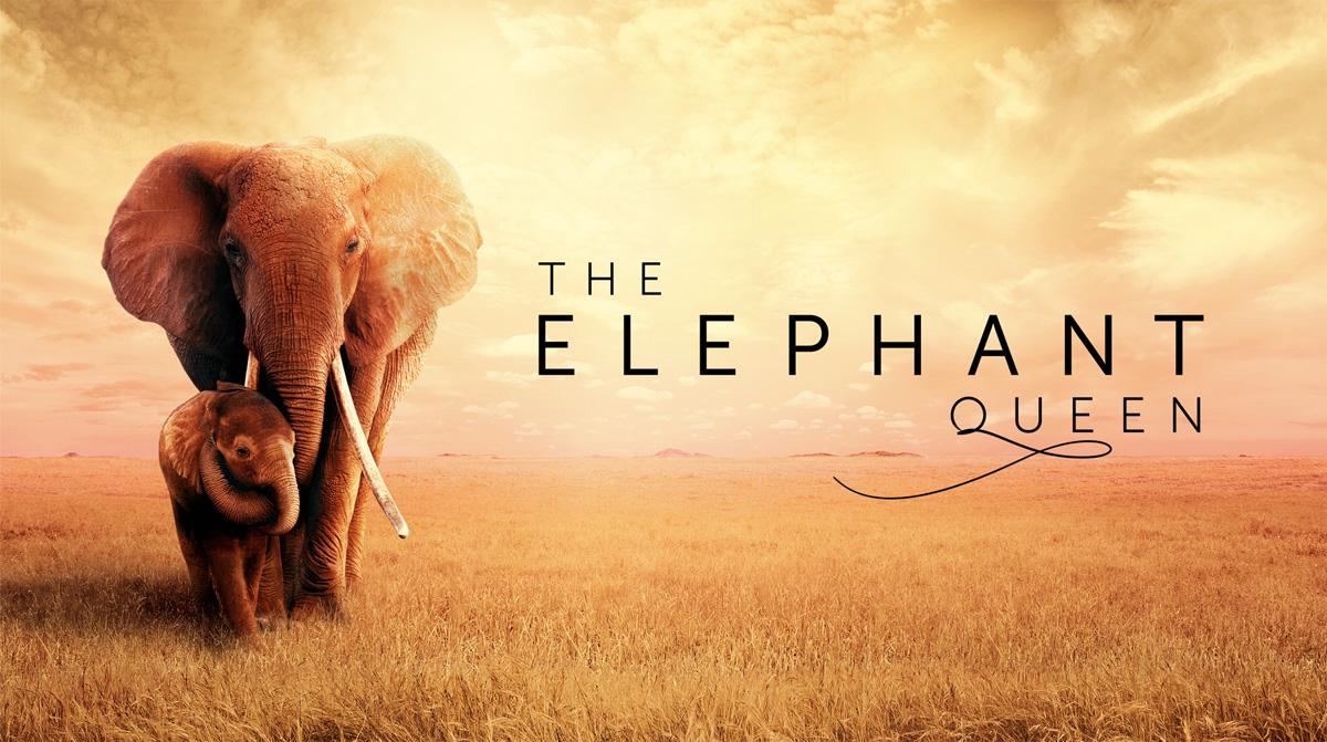 The Elephant Queen, el aclamado documental sobre elefantes que llega a Apple TV+