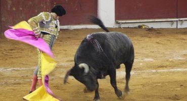AMLO haría consulta para prohibir las corridas de toros en México