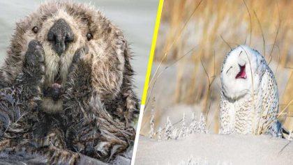 Comedy Wildlife: Los finalistas a la foto más divertida del mundo animal