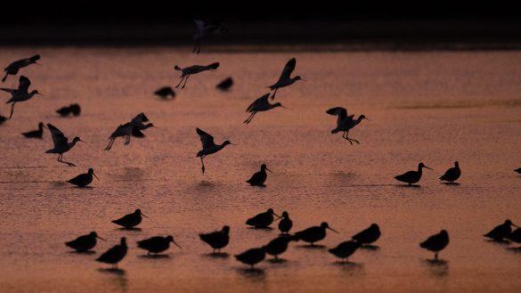 En 50 años desaparecieron 3 mil millones de aves en Estados Unidos y Canadá