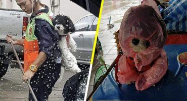 Una barrendera lleva a su perrito a trabajar con ella para que no se quede solo y es lo más tierno del mundo