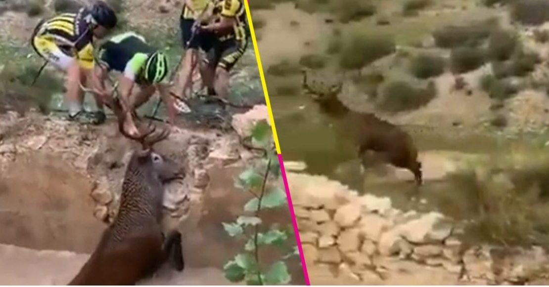 grupo-de-ciclistas-salvo-a-un-ciervo-de-morir-ahogado
