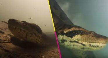 ¡Qué miedo! Unos buzos grabaron a una anaconda gigante y salieron ilesos