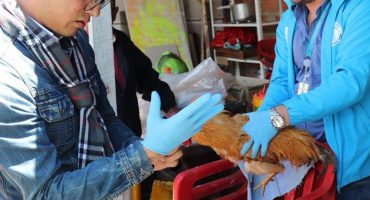 Mundo enfermo y triste: Hombre de la tercera edad abusa sexualmente de gallinas