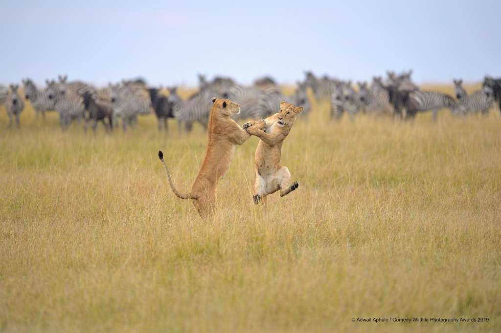 leones-cncurso