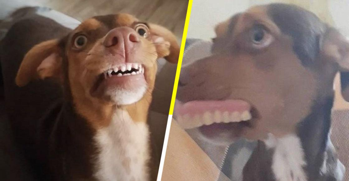 Una perrita robó la dentadura postiza de una abuelita y las fotos son lo mejor que hemos visto