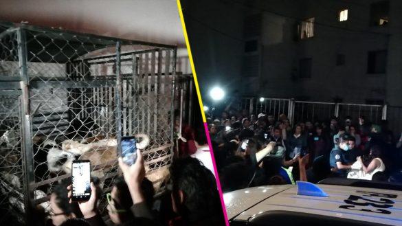 Detienen en Puebla a una mujer que tenía al menos a 30 perros enjaulados