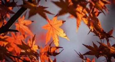 ¡A sacar las chamarras! El otoño ya llegó y trae consigo al frente frío número 1