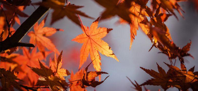 ¡Abusados! El otoño ya llegó y trae consigo al frente frío número 1
