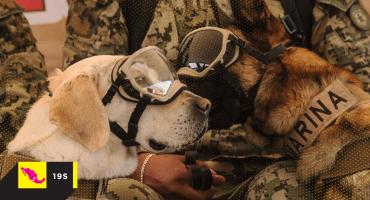 Recordemos a los perritos rescatistas que nos echaron una pata en el 19S