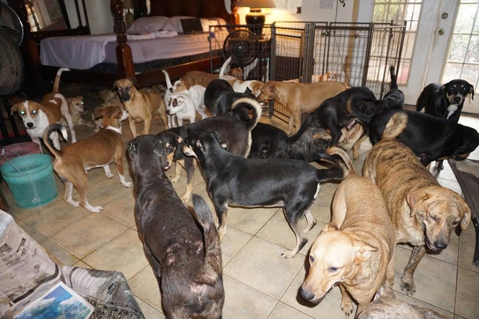 Mujer metió 97 perros a su casa para protegerlos del huracán Dorian