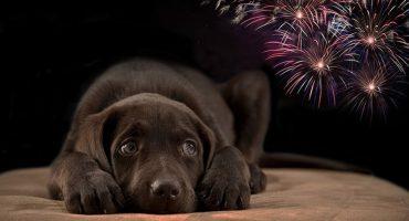 ¿Qué hacer con tus perritos si no puedes evitar los fuegos artificiales?