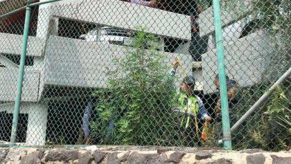 Encuentran planta de marihuana en el estacionamiento del AICM