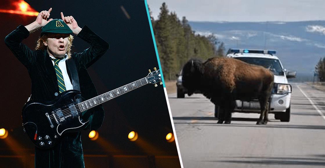 A puro guitarrazo: La policía en Montana pone rolas de AC/DC para alejar a los bisontes