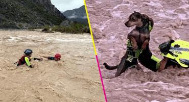 ¡Aplausos para Protección Civil! Mira el momento exacto cuando rescatan a un perrito atrapado en un río