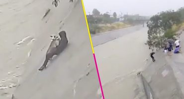 ¡Héroes! Así fue como unos jóvenes arriesgaron su vida con tal de salvar a un perrito de ahogarse ❤️