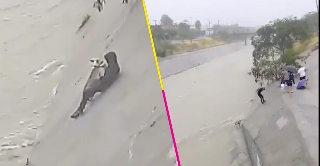 ¡Héroes! Así fue como unos jóvenes arriesgaron su vida con tal de salvar a un perrito de ahogarse