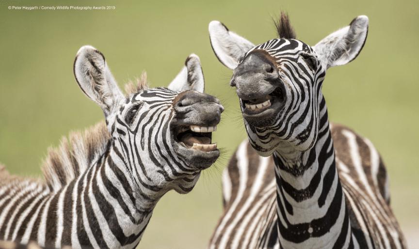 concurso-premia-las-fotos-mas-comicas-de-la-naturaleza