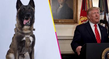 Este perrito ayudó en la operación contra Abu Bakr al Bagdadi