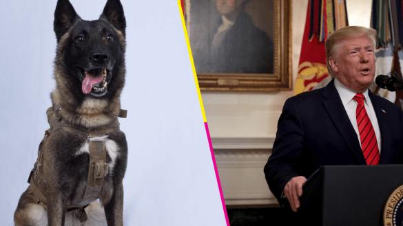 Donald-Trump-Abu-Bakr-al-Bagdadi-perrito