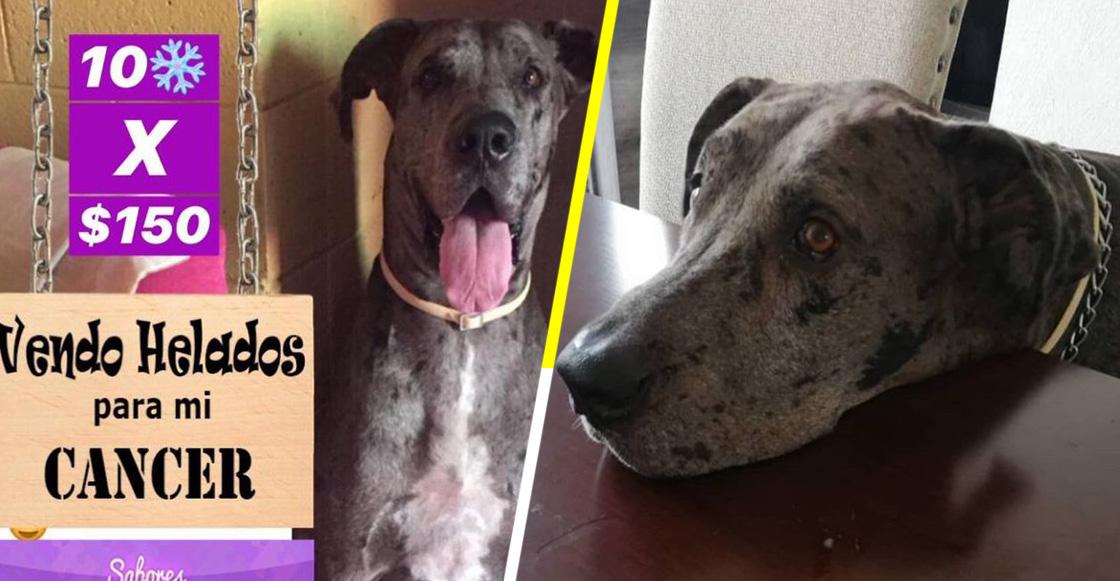 Él es Lancer, el perrito que vende helados para pagar su tratamiento contra el cáncer
