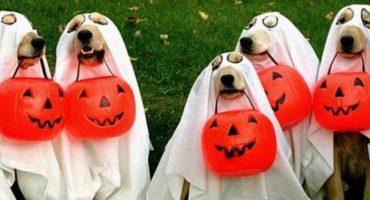 ¡Qué perro miedo! Chequen los mejores disfraces de Halloween para sus perritos