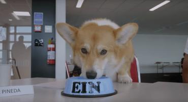 Aw: Netflix revela al adorable perrito que interpretará a Ein en 'Cowboy Bebop'