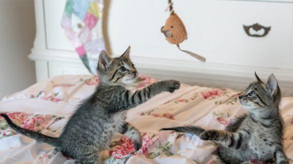 Así fue como dos gatos salvaron la vida de sus dueños cuando se derrumbó su casa