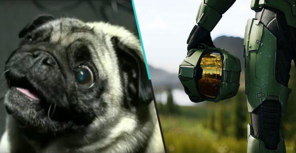 Conoce a Gyoza, el pug encargado de hacer los sonidos de alien en 'Halo'