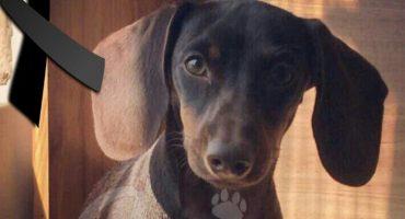 #JusticiaParaMorita: Tras arrojar a una perrita desde un 5° piso, culpable pagará 30 mil pesos