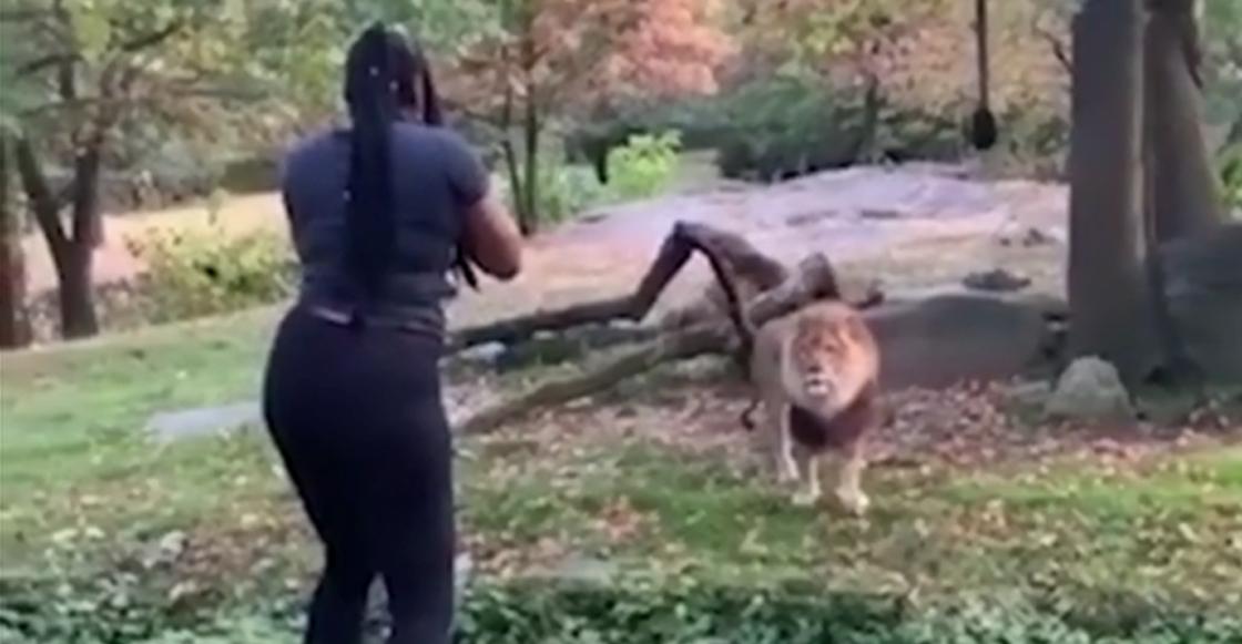 Y en la nota idiota del día: Se metió a la jaula de un león y se puso a bailar