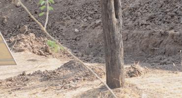 ¿A poco si lo ven? El nuevo reto viral de encontrar un leopardo en esta foto