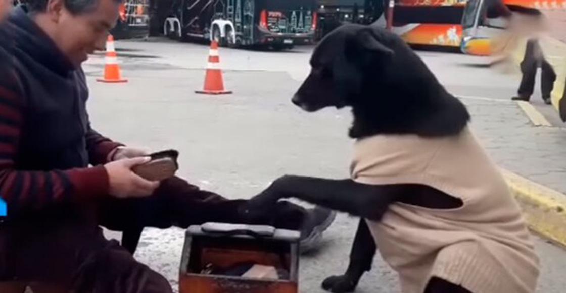 La elegancia ante todo: Perrito pide a lustrador de zapatos que le limpie sus patitas