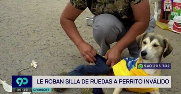 Mundo enfermo y triste: Unos HDSPM le robaron la silla de ruedas a perrito con discapacidad