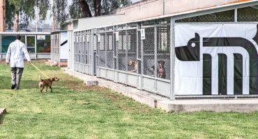 Aquí te decimos cómo puedes adoptar perritos rescatados del Metro CDMX <3