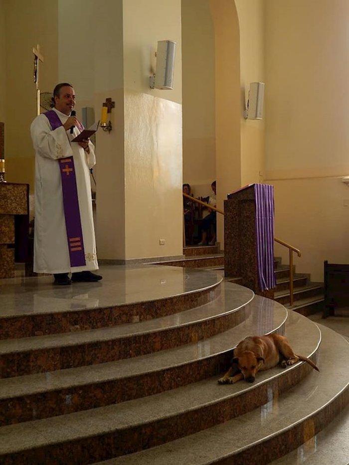 Fe restaurada: Sacerdote lleva a perritos callejeros a misas dominicales para que puedan ser adoptados