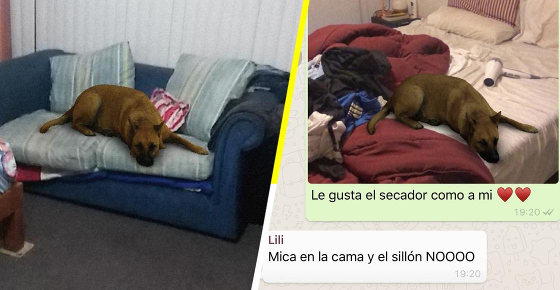 La historia detrás del meme: Este es el origen del filtro de perro que ha enloquecido a las mamás de internet