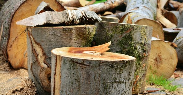 Diputados aprueban hasta 14 años de prisión por la tala ilegal