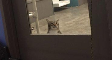 Castigan a gatito Quilty por abrir puertas y ayudar a sus amigos a escapar