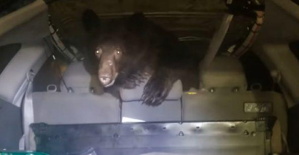 encuentra un oso en su auto y reacciona como si nada