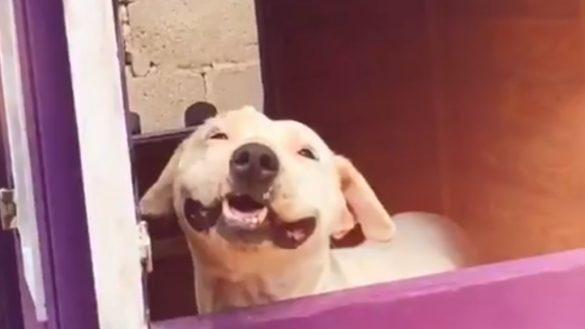 ¡Huele a justicia! Prisión preventiva para el hombre que presuntamente prendió fuego a la perrita Lala