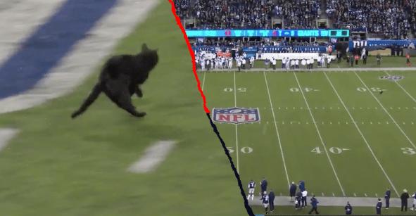 El momento en el que un gato negro interrumpió el Cowboys vs Giants